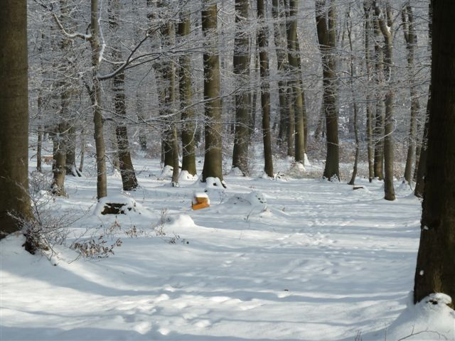 4: Schneebedeckter Weg im RuheForst