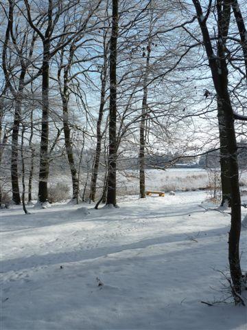 5: Schneebedeckter Weg im RuheForst