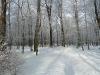 3: Schneebedeckter Weg im RuheForst
