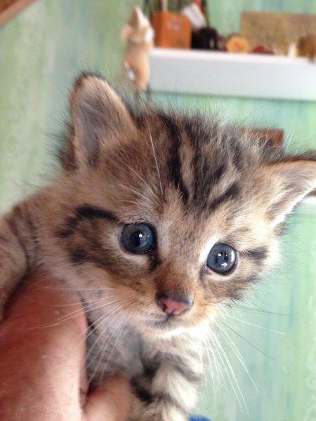 Foto 2: süße kleine Wildkatze